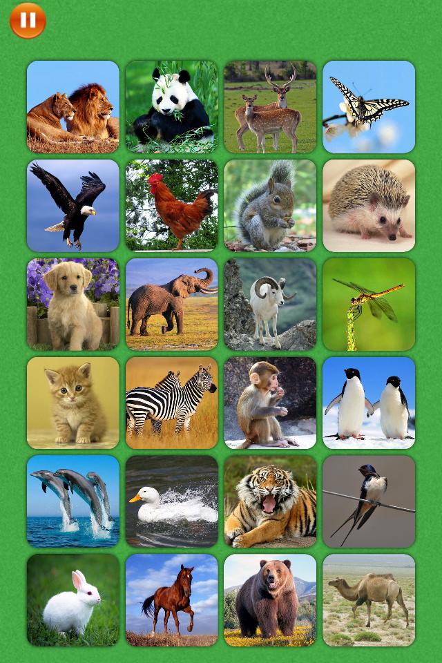 宝宝看图学习与趣味游戏 游戏中包含了24种常见动物,24种常见水果,和24种常见的蔬菜。全部使用实物图片。 游戏共有4种玩法: 识图,适合1周岁以上的宝宝在父母陪同下认识事物,图片配有真人读音。 辨图, 认识所有图片后,根据文字和听读音来找出对应的图片。 图片对对碰,适合稍大一点的宝宝, 匹配两个相同的图片,即可消除它们,消除所有的图片后胜利。针对不同年龄的宝宝,难度逐步增加。 记忆力训练,训练宝宝的记忆力,随着难度逐渐增加,也可适用于更大年龄的孩子或成年人。